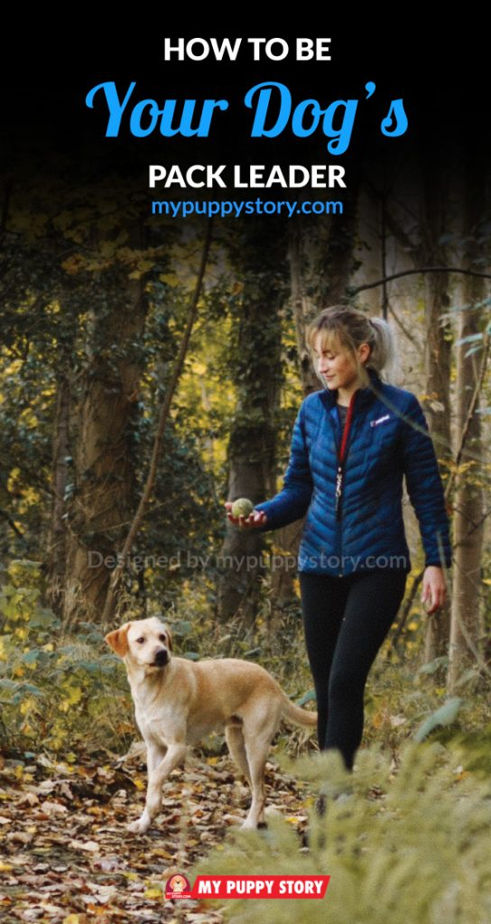 How to be your dog's pack leader