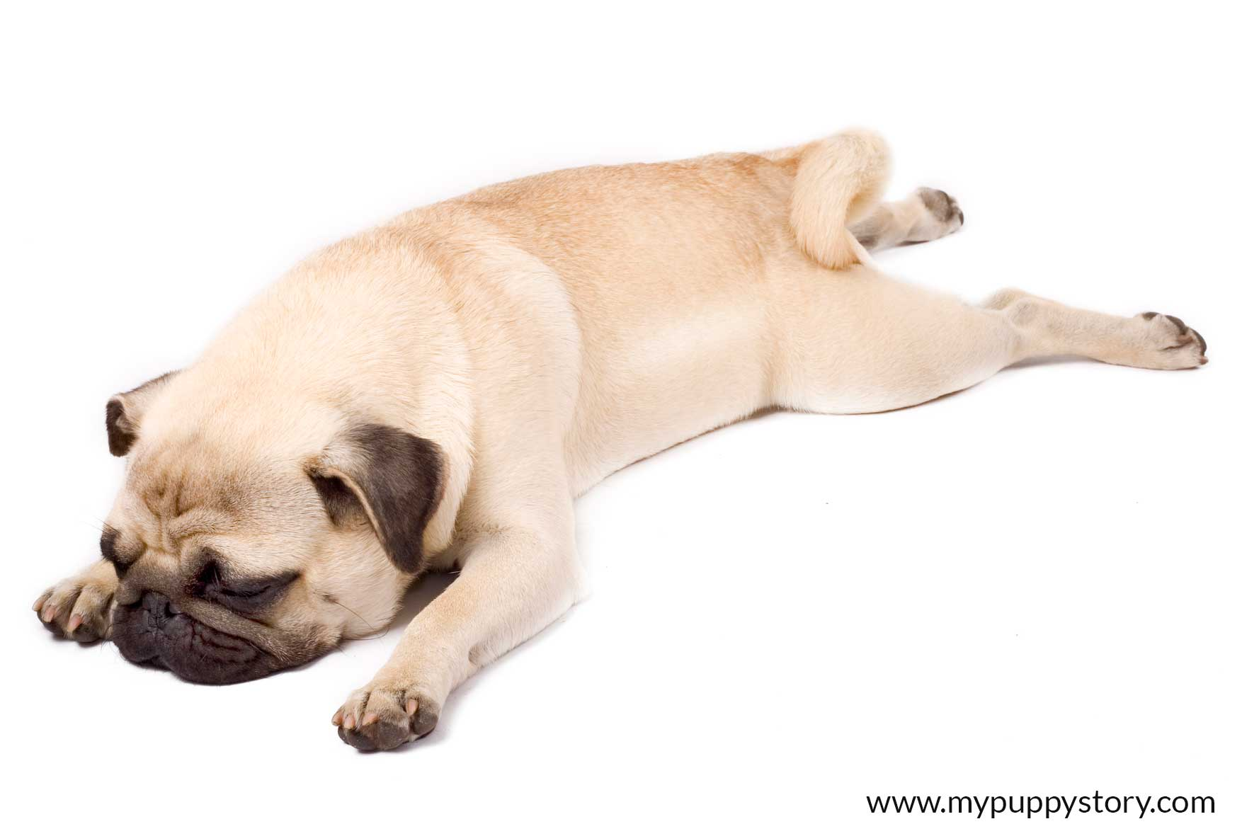 What Can A Dogs Sleeping Position Mean