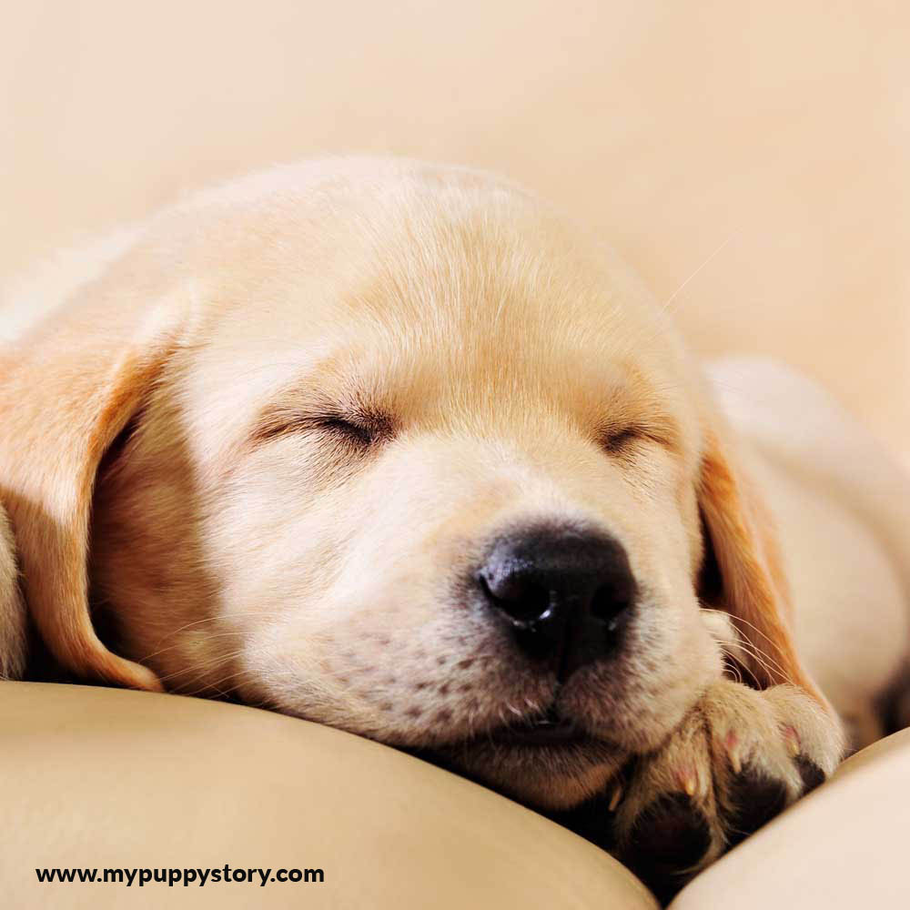 Dog-Sleeping-Positions--What-Does-Your-Pup's-Mean