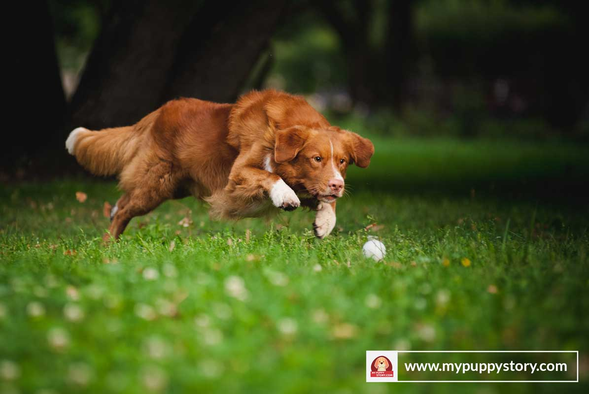 How Much Dog Food Per Day Golden Retriever