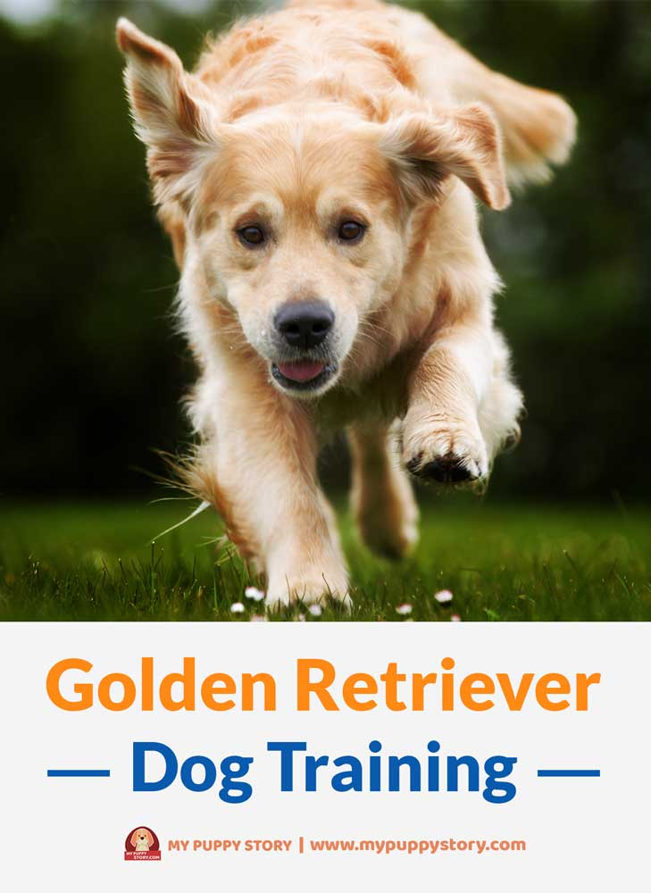 Training Your Golden Retriever My Puppy Story