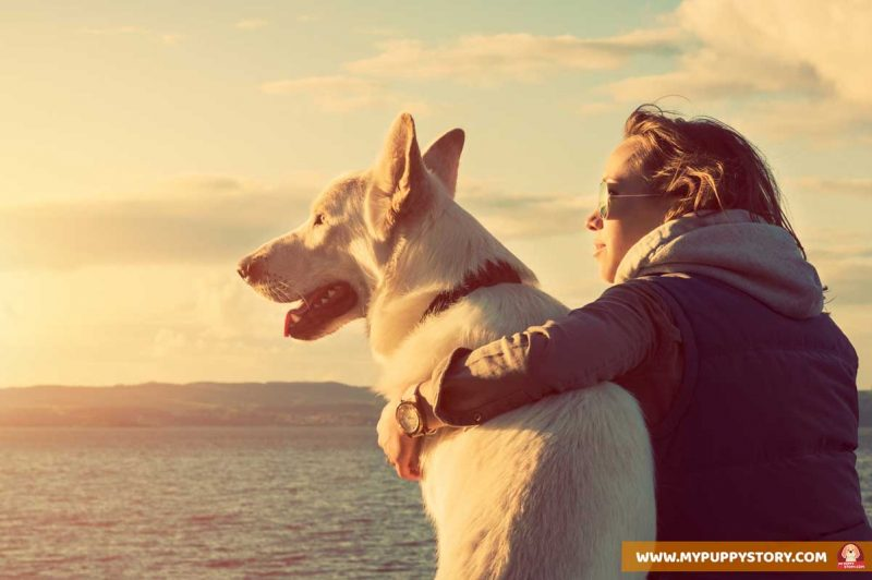 How To Be Your Dog S Pack Leader My Puppy Story