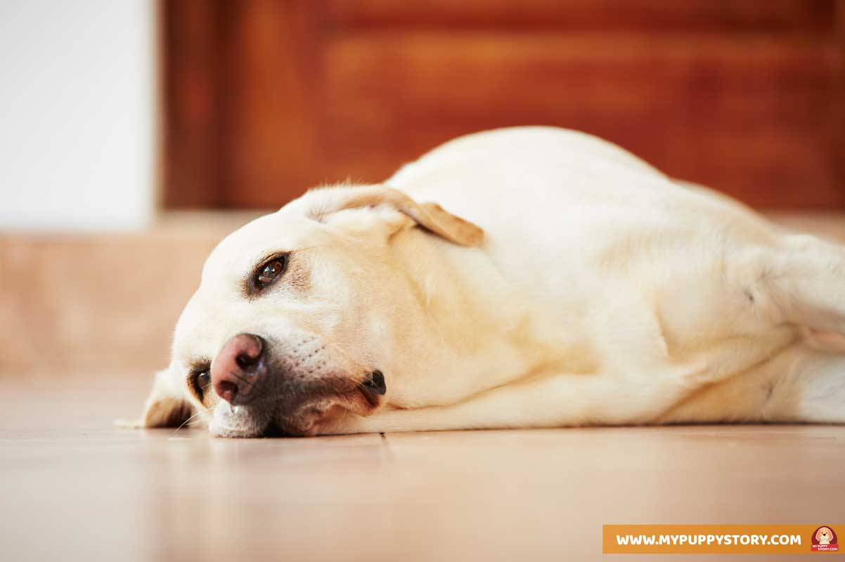 Different Types Of Dog Sleeping Positions And What They Mean