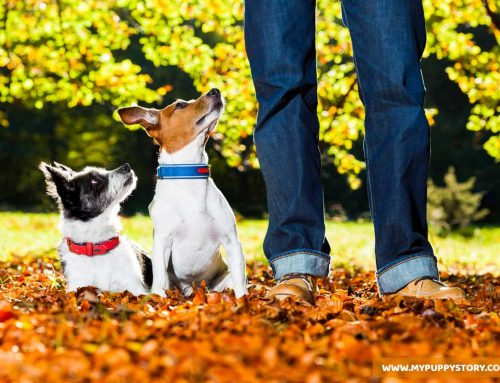 The Truth About Dog Training