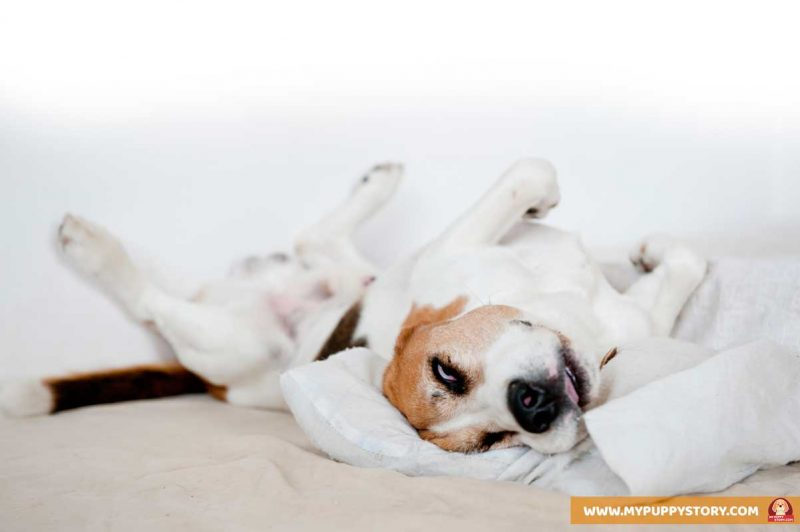 Different Types Of Dog Sleeping Positions And What They Mean My