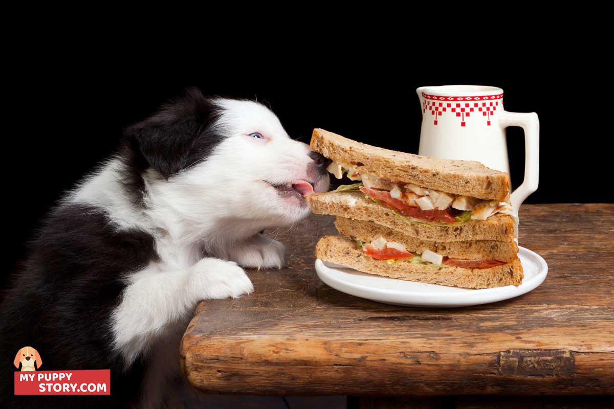 Choosing The Right Dog Diet