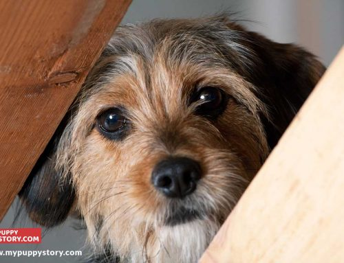 Dog Fears And Phobia And How To Overcome Them