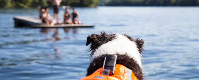 Best dog life jacket - My Puppy Story