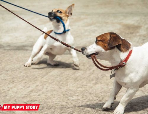 Resolve Your Dog's Leashing Issues