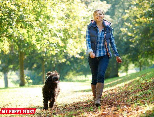 Loose Leash Training for Dogs