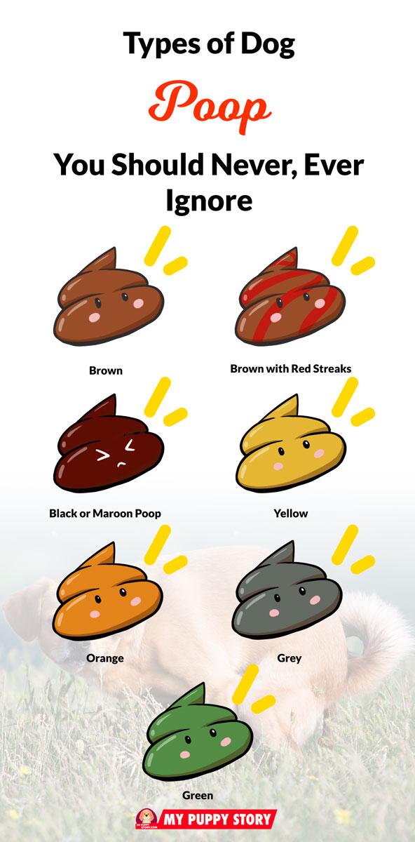 Dog Poop Color