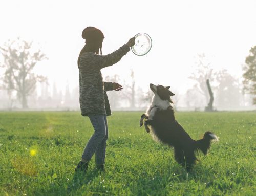 What Is Positive Training for Puppies?