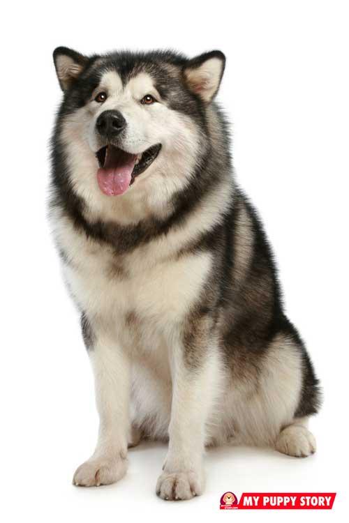Dog Breeds My Puppy Story